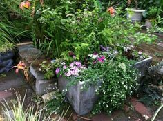 Old cement laundry sink with blueberry plants in each sink and a few flowers. - Jewell's Photos
