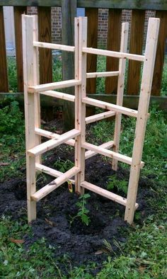 Tomato trellis. Supports 4 plants