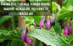 Varicose Veins, Plant