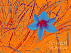 Blue Lily Marcia Lee Jones