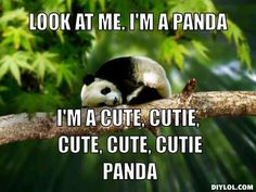 what i would say all day if i was a panda