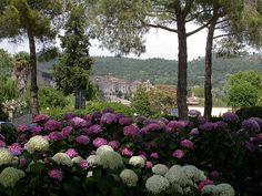 Landscape with hydrangeas, Bolsena by jmlwinder, via Flickr