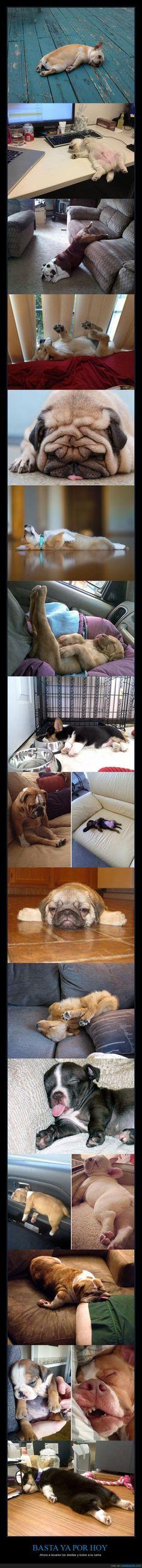 Qué sueño que tienen estos perros... - Ahora a lavarse los dientes y todos a la cama