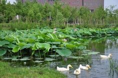 Shenyang, City, Plants, Cities, Plant, Planets