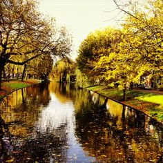 Noordsingel. Foto door Moniek Kuipers.