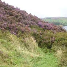 Haworth moors.... <3 to go here!