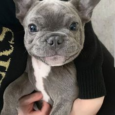 Orion looks pretty happy to be having a cuddle with his Mama 😍😍😍 French Bulldog Puppies, Cute Dogs And Puppies, Pet Dogs, Cute Creatures, Cute Funny Animals, Baby Animals, Your Dog, Dog Lovers, Cuddle
