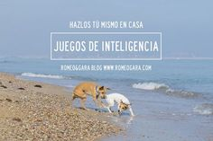 Juegos de inteligencia para perros