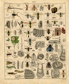 Instant Art Printable - Insects - Natural History - The Graphics Fairy