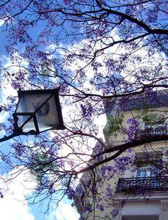 purple blossoming sky