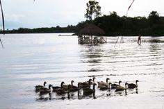 Aves Aquaticas