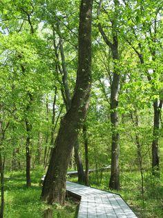 http://upload.wikimedia.org/wikipedia/commons/d/d2/Big_Oak_Tree_State_Park_Boardwalk.JPG