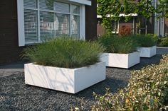 Moderne voortuin met grote planten witte bakken aangeplant met Festuca 'Intense Blue'.