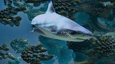 ❝ La misteriosa muerte de este tiburón blanco desconcierta a los biólogos (FOTO) ❞ ↪ Vía: Entretenimiento y Noticias de Tecnología en proZesa