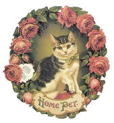 Home Pet