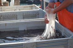 http://www.iflscience.com/plants-and-animals/hagfish-slime-biomaterial-future