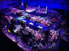 Corner shot  #aquarium #greatbarrierreef #reef #subaru #reebok #iphoneonly by coral_master45 http://ift.tt/1UokkV2
