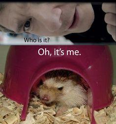 Martin Freeman is a hedgehog! XD