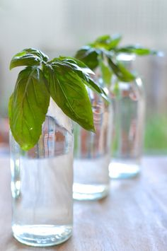 If you've got the patience for it, regrowing food can be fun and save you a lot of money over time!