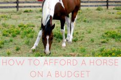 How to afford a horse on a budget - via Hoofbeats and Ink