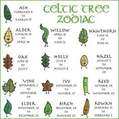 The Celtic Tree Zodiac is based on the ancient idea that the time of our births is pivotal to the formation of our personality and behavior.