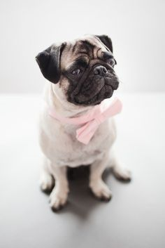 Pulling off the pastel pink bow tie quite well, don't you think?