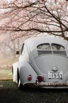 1953 VW