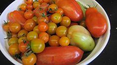 Tomates, Été, Récolte, Frais, Organiques