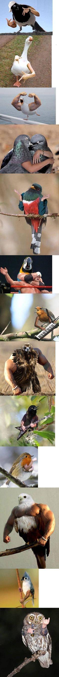 birds with hands