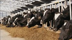 A report from the federal Agriculture Department shows that Wisconsin lost almost 400 dairy farms in the last year, though one official says the news isn't all that bad.