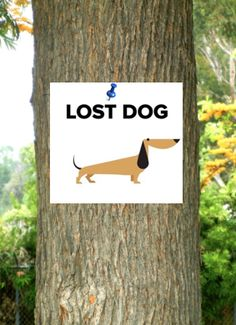 Lost and stolen dogs – How to find your beloved pooch