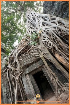 Ta Prohm is located in the Angkor region, Cambodia. This section is seen Inside the temple itself. Asia Travel, Travel Tips, Ta Prohm, Angkor Wat Cambodia, Cambodia Travel, Siem Reap, Southeast Asia, Temple, Travel Photography
