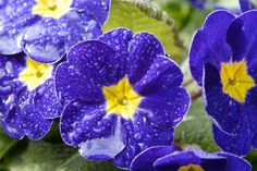 water droplets on garden flowers