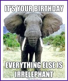 Birth Day     QUOTATION – Image :     Quotes about Birthday  – Description  Funny Animal Birthday Meme: Everything else is irrelephant!  Sharing is Caring – Hey can you Share this Quote !