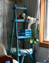 diy cat tree (ladder, wine box, piece of wood)... beautiful! @ Juxtapost.com