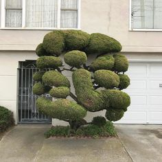 The Dr. Seuss-Like Topiaries of San Francisco Photographed by Kelsey McClellan