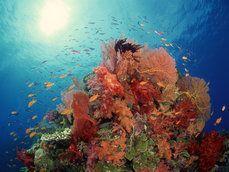 onderwater koraal rif en vis