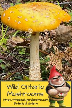 Found this beautiful yellow wild mushroom on the Bruce Peninsula. Featured in our viewing gallery for botanicals. Wild Mushrooms, Stuffed Mushrooms, Yellow Mushroom, Different Plants, Around The Worlds, Backyard, Bird, Gallery, Green