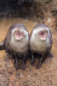 Otters belt out a duet - January 8, 2014