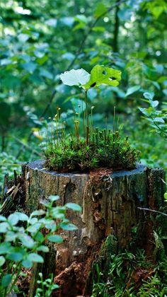 Wild Photography, Landscape Photography, Rainforest Plants, Beautiful Landscape Wallpaper, Picture Tree, Wild Forest, Plant Aesthetic, Flower Landscape, Fairy Garden Houses