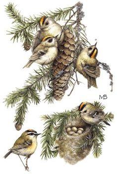birds and cones