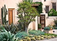 Garden entry to a desert home - from Traditional Home magazine