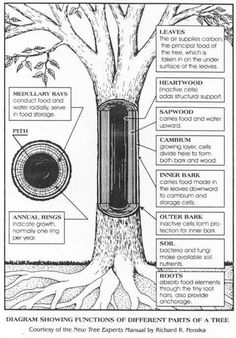 Science - Parts of a Tree Science Lessons, Teaching Science, Science For Kids, Life Science, Science And Nature, Teaching Kindergarten, Science Worksheets, Science Kits, Science Fair
