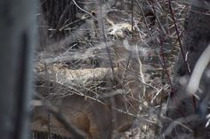 St. Vital Park - So I Was Thinking Deer, Park, Animals, Animales, Animaux, Parks, Animal, Animais, Reindeer