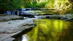 Take A Scenic Stroll Through Sweet Creek Trail, An Easy Family-Friendly Hike In Oregon Oregon Camping, Oregon Road Trip, Oregon Trail, Road Trips, Oregon Vacation, Oregon Coast Hikes, Oregon Falls, Florence Oregon, Oregon Waterfalls