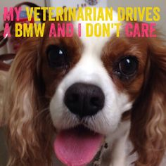 My Veterinarian Drives a BMW and I Don't Care Why people think it is ok to demand Veterinarians to work for free? After all if Veterinarians loved animals they wouldn't charge to help keep them healthy or care for them when they are sick. Join the conversation and share your own experiences http://twolittlecavaliers.com/2015/01/veterinarian-drives-bmw.html