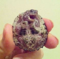 This turtle is laughing at ALL of your jokes.