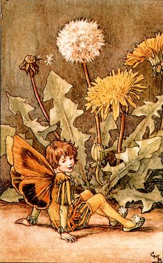"Vintage print 'The Dandelion Fairy' by Cicely Mary Barker from ""The Book of the Flower Fairies""; Poem and Pictures by Cicely Mary Barker, Published by Blackie & Son Limited, London [Flower Fairies - Spring] Cicely Mary Barker, Flower Fairies, Grandes Photos, Spring Fairy, Dandelion Flower, Dandelion Clock, Fairy Pictures, Vintage Fairies, Fantasy Illustration"