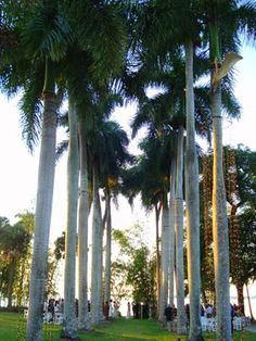 Royal Palm Alley at Edison/Ford Estates Ft Myers Florida
