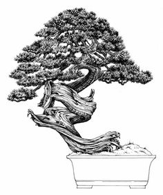 Dibujo del maestro venezolano Nacho Marin perteneciente a su libro 100 Bonsai.